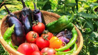 【野菜博士ちゃん】夏の体のお悩み解決野菜まとめ!免疫力・夏バテ・ダイエットにも(7月25日)