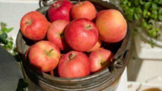養命酒の信州りんごとハニーブッシュの価格や美味しい飲み方はある?